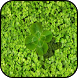 Clover Wallpapers by PikasApps