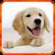 Dog Live Wallpaper by 3D Top Live Wallpaper