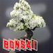 Creation Sdwaf Plants by seemala