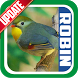 Masteran Kicau Robin by EdukaPlay