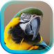 Tropic Parrot live wallpaper by AnastasiaApps
