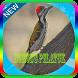 Ocehan Burung Pelatuk Mp3 by jogem apps