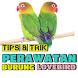 Tips & Trik Perawatan Burung Lovebird by Padepokan Cirebon-Banten