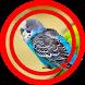 Suara Burung Parkit Mp3 by Omasuhu