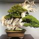Bonsai Plants by alifstudio