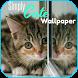 Cute Kitten Wallpapers by kingsmen.apps