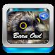 Barn Owl Sound by Ganiarto Media Digital