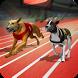 Crazy Greyhound Race Simulator - Dog Racing Game by Thunderstorm Studio - Free Fun Games