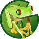 Tina, the jumping frog by Pispo
