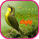 Terapi Burung Kicau Lengkap by Lk21 Studio