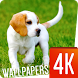 Puppies Wallpapers 4K by Ultra Wallpapers