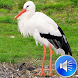 Stork Bird Sounds Ringtones by msd developer multimedia