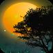 Fireflies Live Wallpaper by FlipToDigital