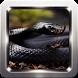 Black Mamba Snake Wallpapers by Omah Pandega