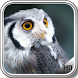 Owl Wallpaper by LegendaryApps