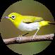 Suara Burung Pleci Offline by Suismanking Dev