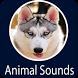 Animals Sound by Bilaliapps