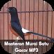 Masteran Murai Batu Gacor MP3 by CUPULUWAK