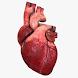 Cardio3D