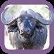 Sasol Natuurlewe vir Beginners by App Developer Studio