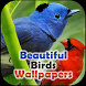Beautiful Birds Wallpapers by Purple Vision