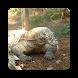 Komodo Dragon Wallpaper HD by Laylali