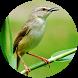 Suara Burung Prenjak Gacor - Offline by Suismanking Dev