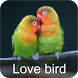 Masteran lovebird Ngekek by elz