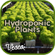 Hydroponics Plant by Vesca