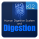 Human Digestive System by Ajax Media Tech Private Limited