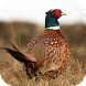 Pheasant Sounds by eBook Apps