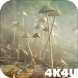 4K Mushrooms and Smoke Live Video Wallpaper by 4K4U