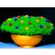 Dry Flowers Vibgyor by Sinoj Thomas k