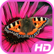 Butterfly Images by WALLPAPER