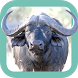 Sasol Wildlife for Beginners by App Developer Studio