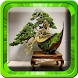 Bonsai Tree Design Ideas by BK1 Designs