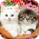 Cute Baby Animals Pictures by Doknow...