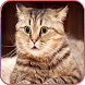 HD Cute Cat wallpapers by Android Wallpaper Store