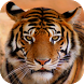 Tiger Sounds by eBook Apps