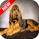 Bloodhound Wallpapers by Fresh Wallpapers