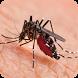 Dengue síntomas tratamiento y prevención by itaQppa