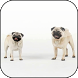Mops Video 3D Wallpaper by 3D Video Live Wallpapers