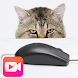 Mouses and cats videos
