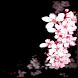 Cherry Blossom Wallpaper by Bajindol