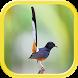 Masteran Burung Gacor Juara by Bima Sakti Dev