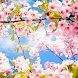 Cherry Blossom Wallpaper HD by SDSstores