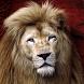 lion live wallpaper by ashwin.gamedev