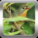 Canto do Rouxinol by Givix app