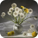 Dandelions Wallpapers by Dabster Software