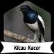 Suara Burung Kacer +1000 Kicau by Terkicaulah